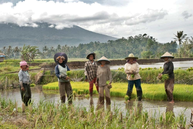Comunidad Minangkabau 1